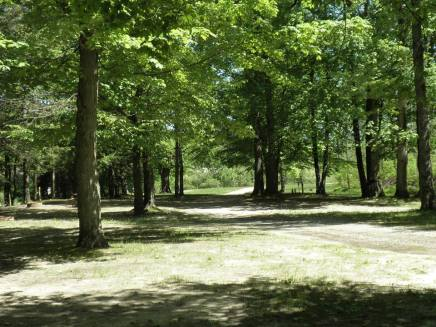 """The """"back yard"""" of my childhood home:  Crystal Creek Campground."""
